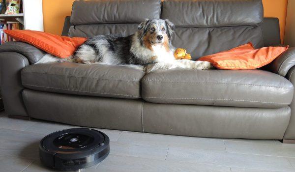 cane divano aspirapolvere roomba