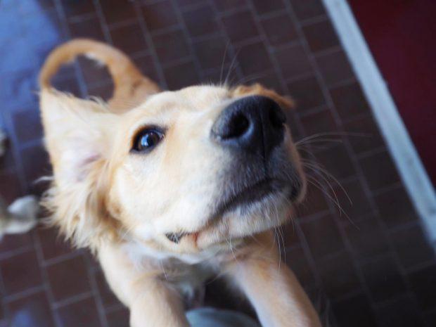 cane cucciolo che si stiracchia