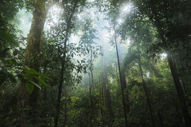 biosfera foresta pluviale