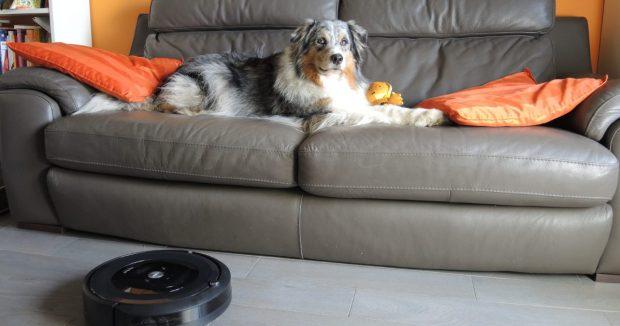 cane divano aspirapolvere roomba fb