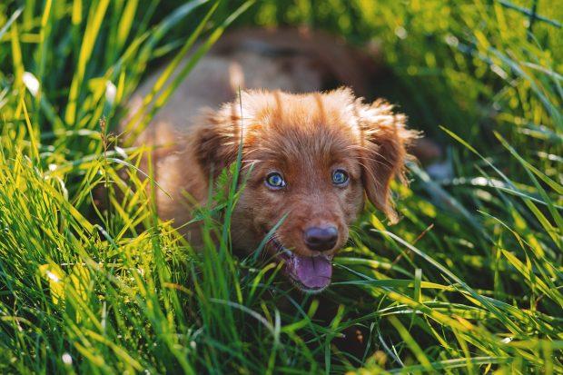 cucciolo nell'erba alta