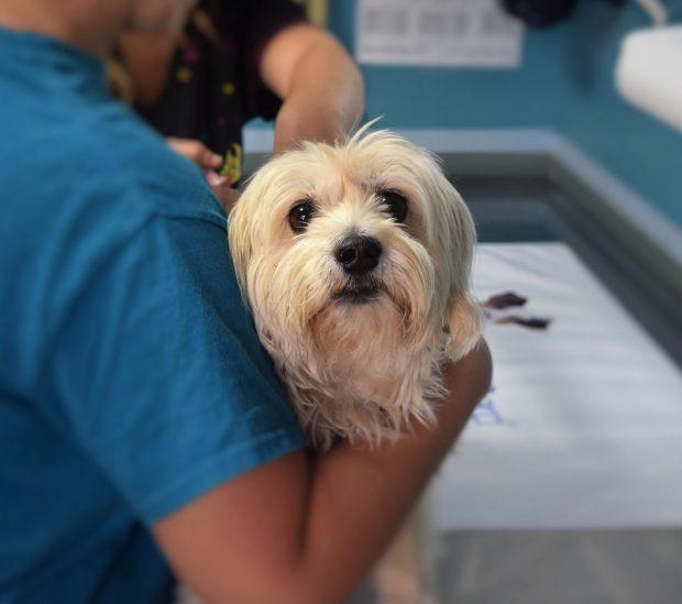 cane dal veterinario tosse