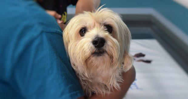 cane dal veterinario tosse fb