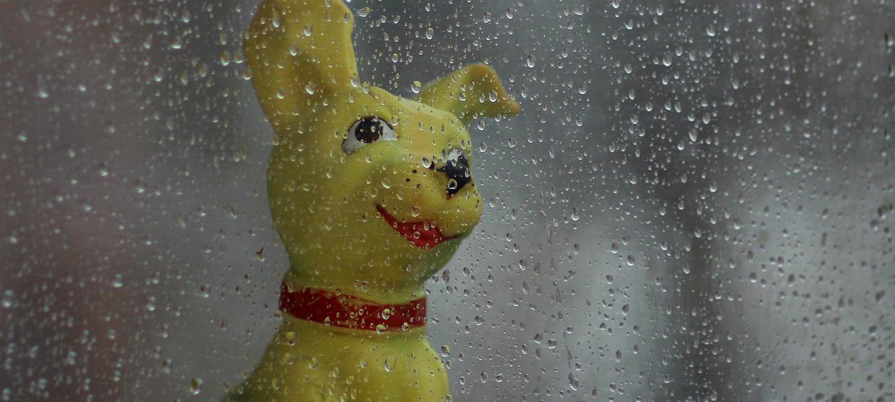 gioco a forma di cane dietro vetro con pioggia