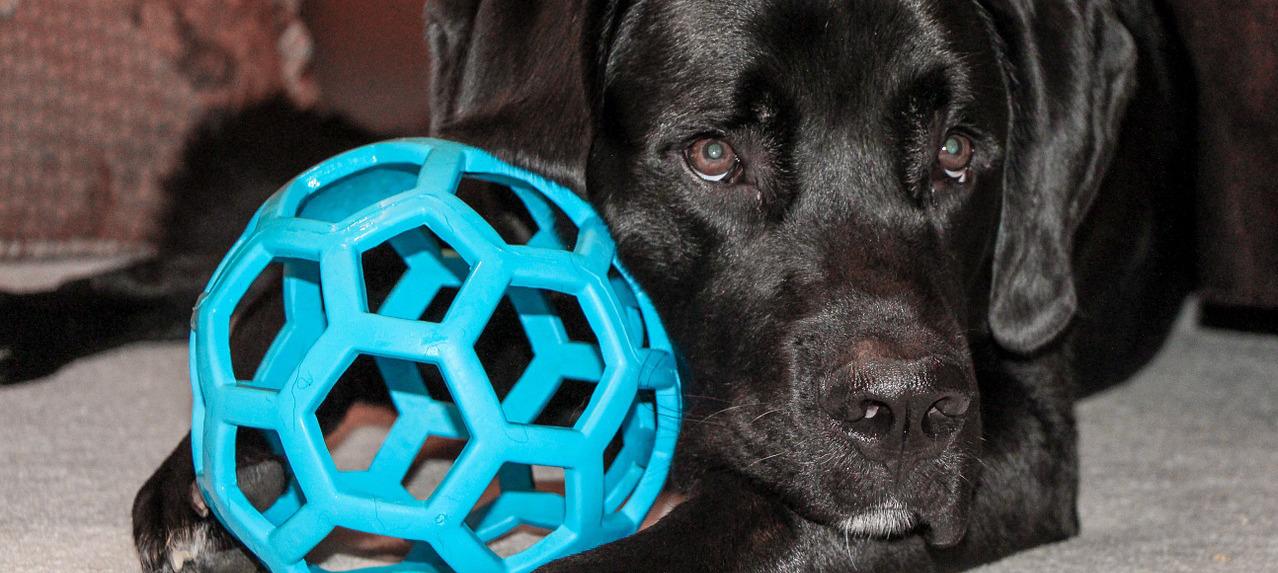 cane con gioco