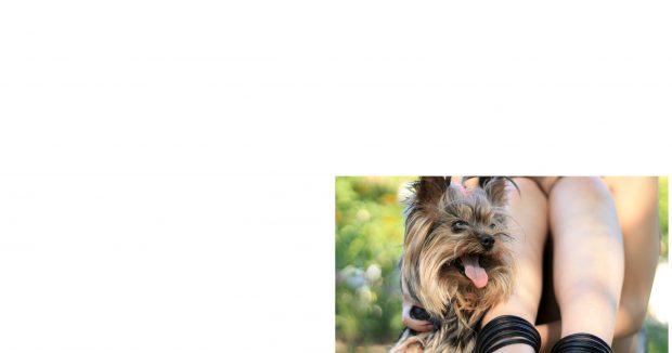 cagnolino lingua