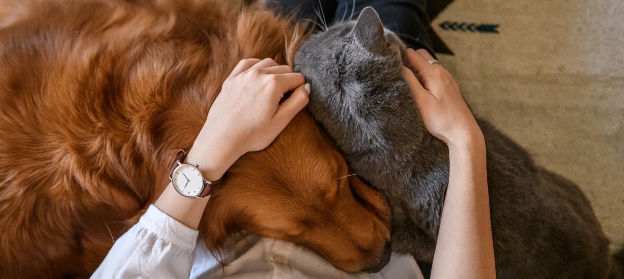 coccole cane e gatto insieme