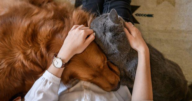 cane e gatto insieme abbraccio